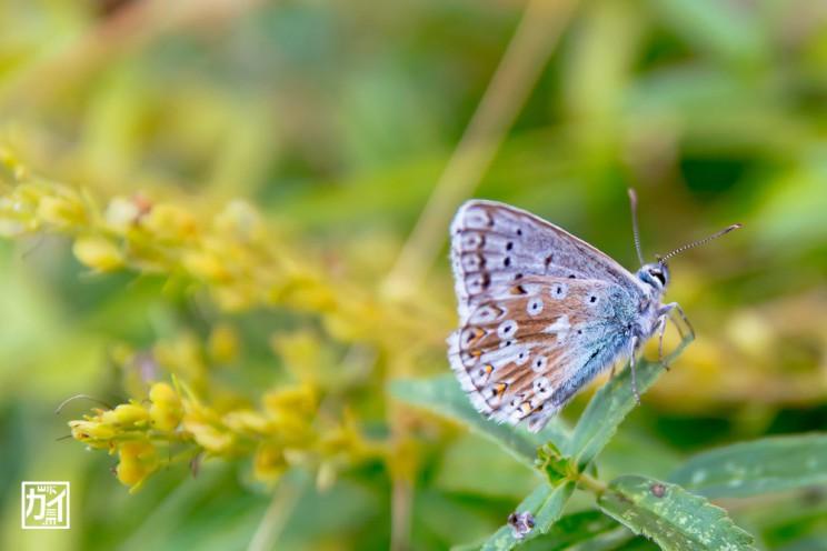 butterfly_LR